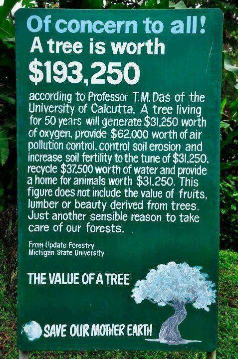 The Worth Of A Tree