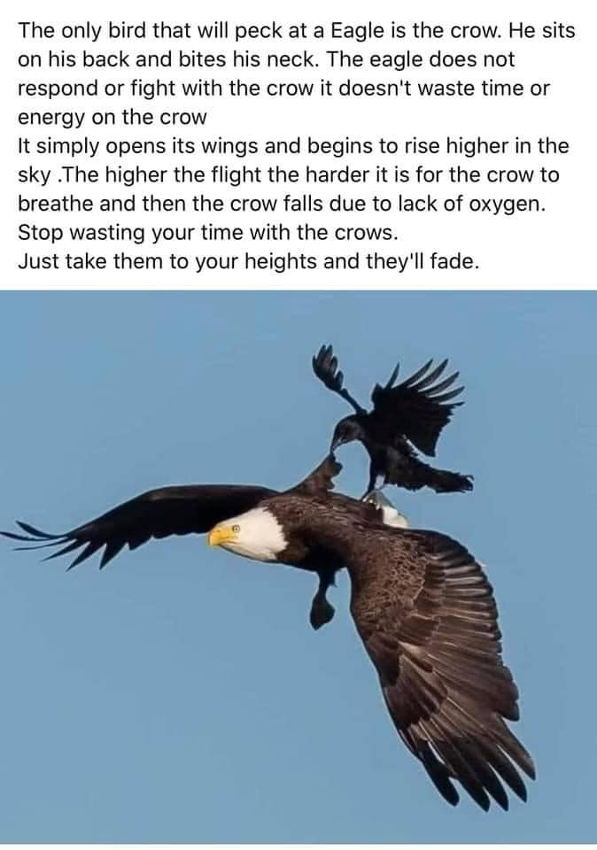 The Eagle And The Crow