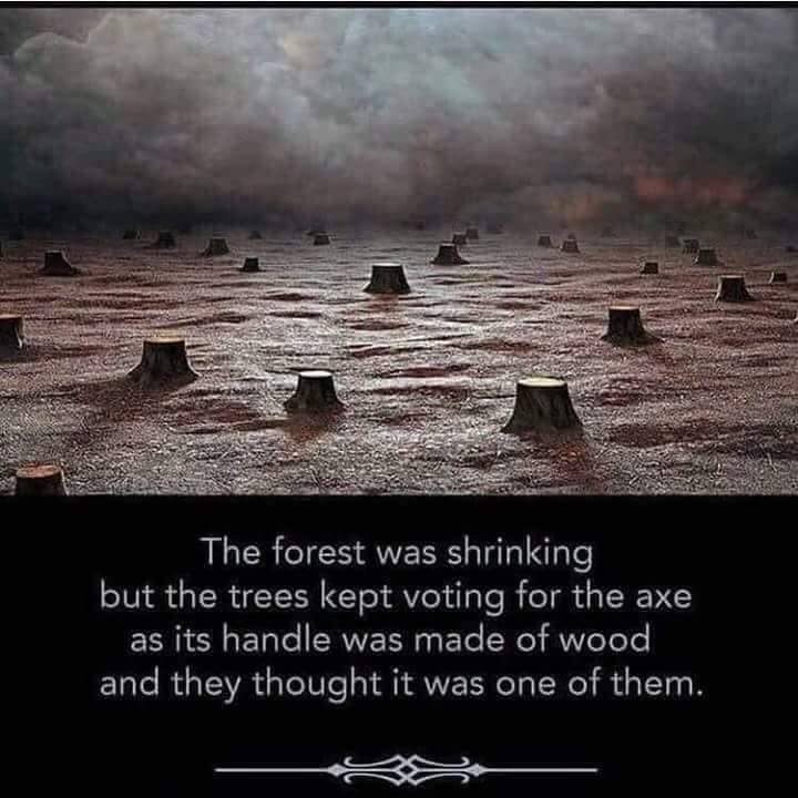 The Trees Kept Voting For The Axe
