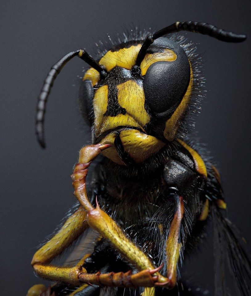 Insect_Thinking