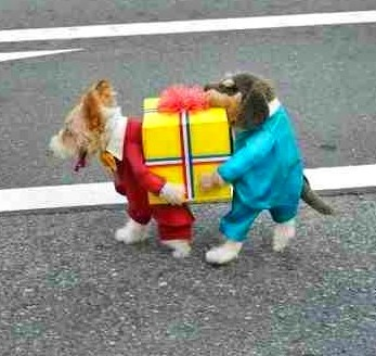 Two Dogs Carrying Present