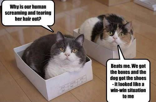 Win Win Cat Talk