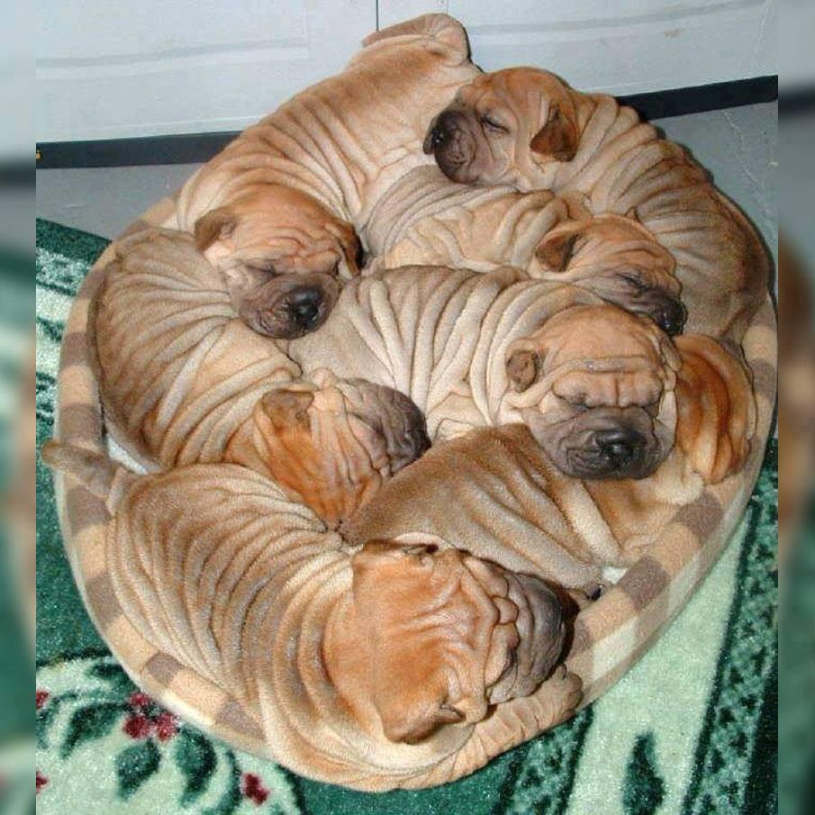 Wrinkle Cake