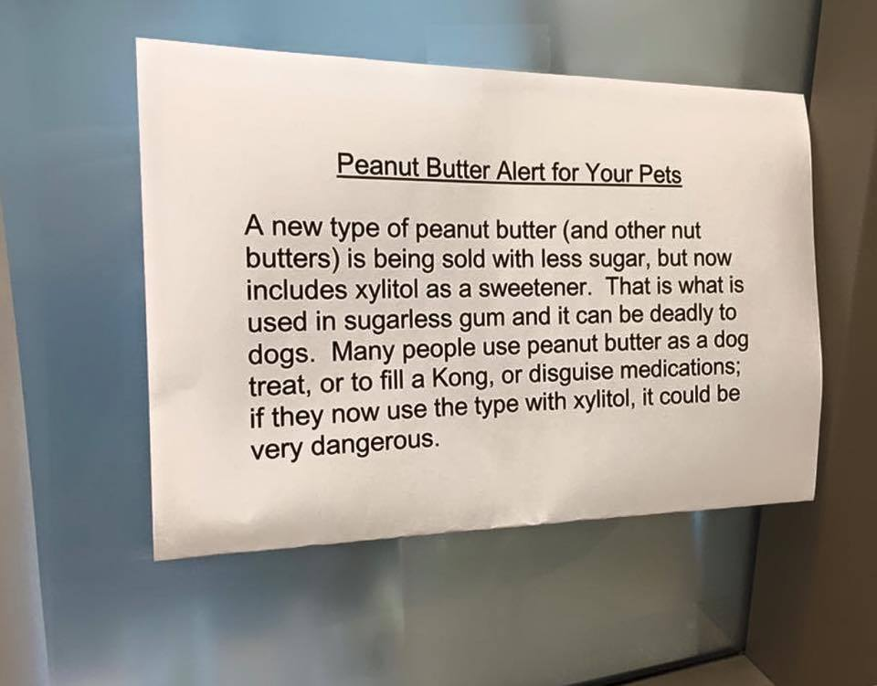Xylitol Deadly To Dogs