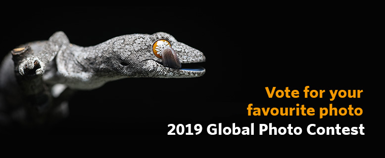 2019 Photo Contest