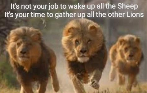Gather The Lions