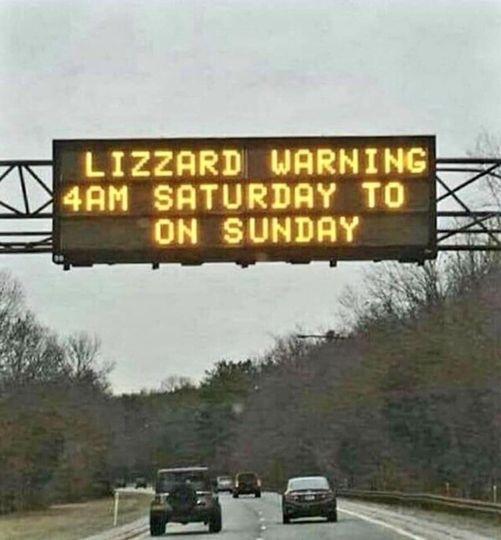 Lizzard Warning