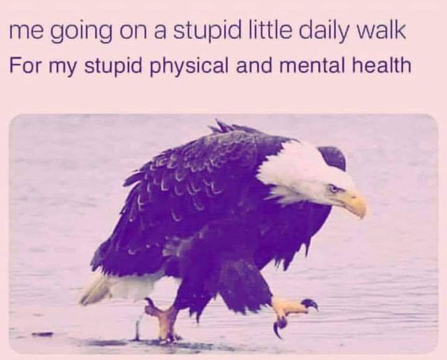 One Angry Eagle